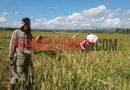 Petani di Persimpangan Jalan: Reforma Agraria, RUU Pertanahan, dan RUU Sistem Budidaya Pertanian Berkelanjutan