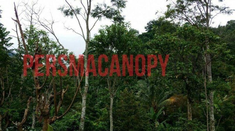 Singgah di Lahan Agroforestry Pak Gianto