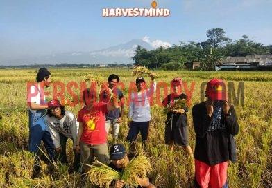 "Harvestmind: ""Siang Bertani, Malam Berpesta"""